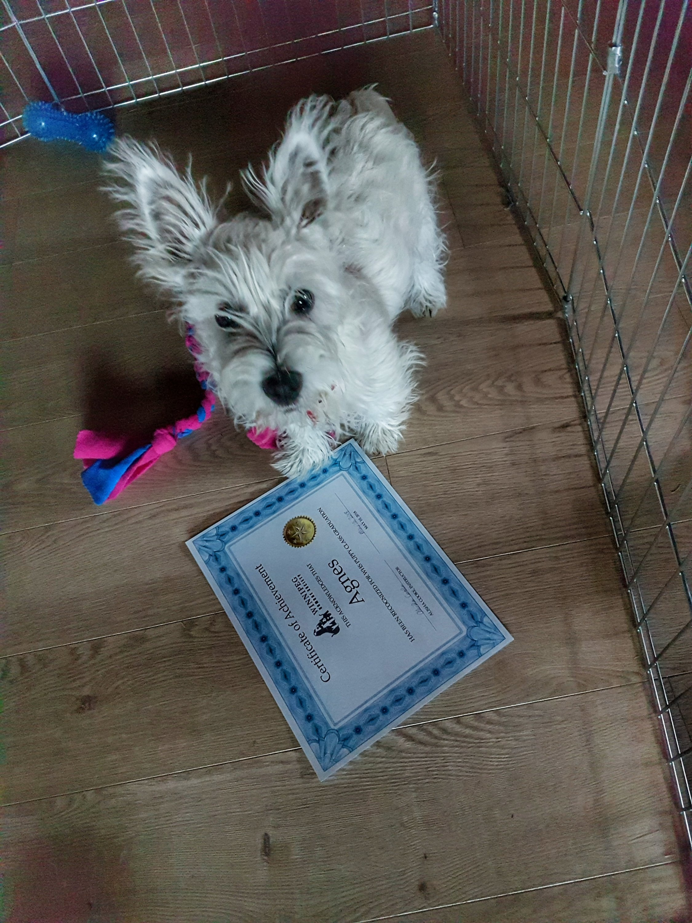 Puppy with certificate from puppy school